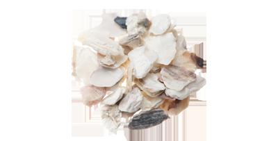 牡蛎(ボレイ)